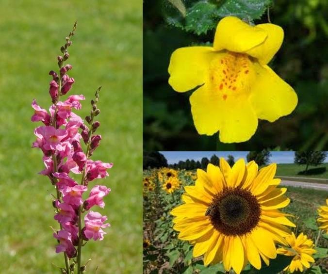 flower_session